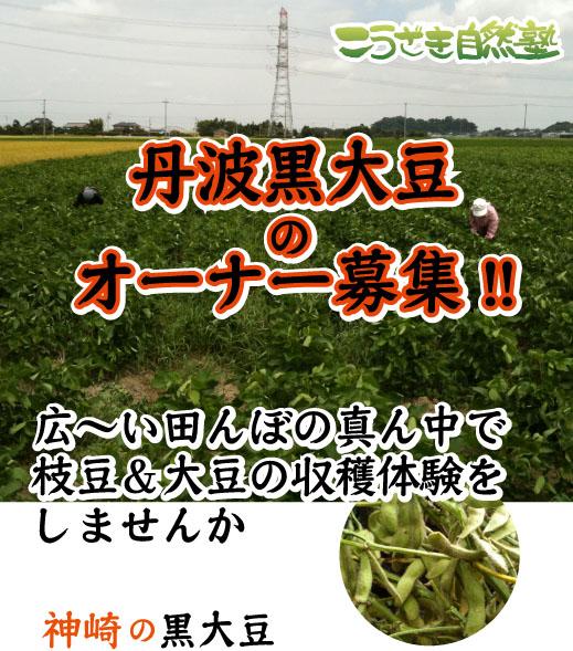 kurodaizu_p01